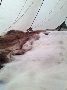 Reindeer pelts in the tipi