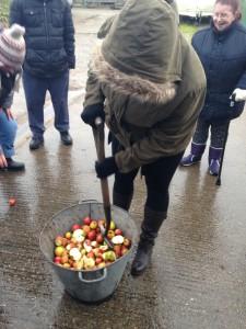 Preparing apples for pressing